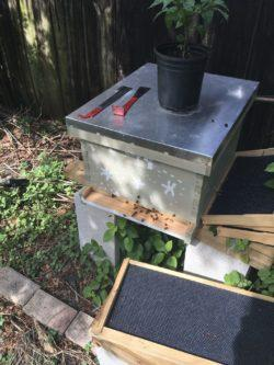 our bee box for South Florida beekeeping
